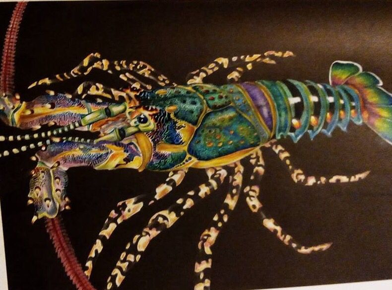 Rock Lobster By Csho Chee Siung LobsterColoring BooksColouring