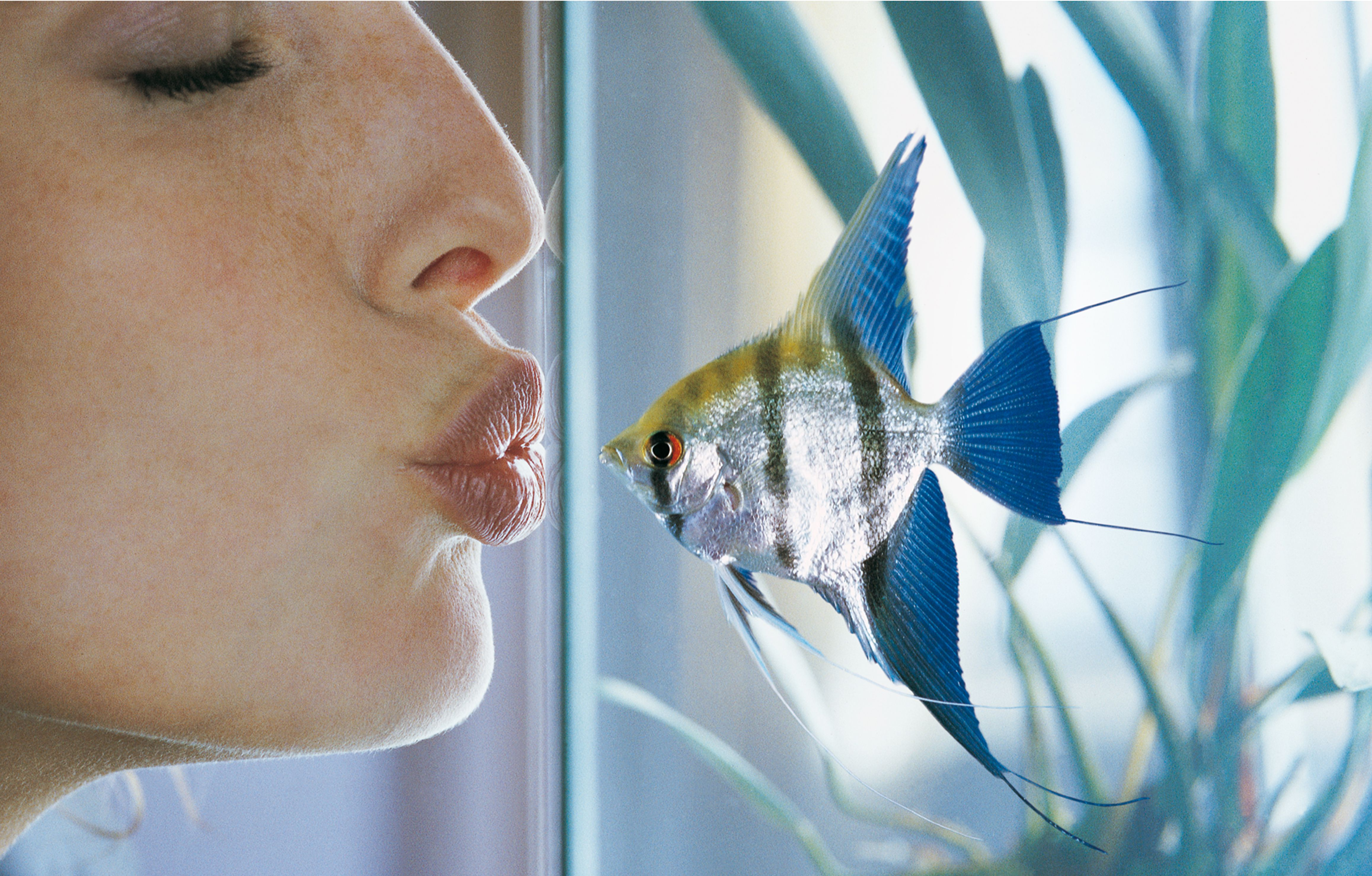 fish respond to recurring noises and sounds and can often recognise