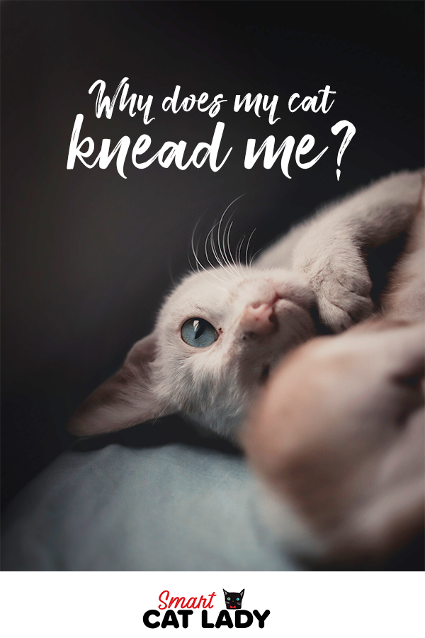 Why Does My Cat Knead Me? Cats, Cat facts, Cat lovers