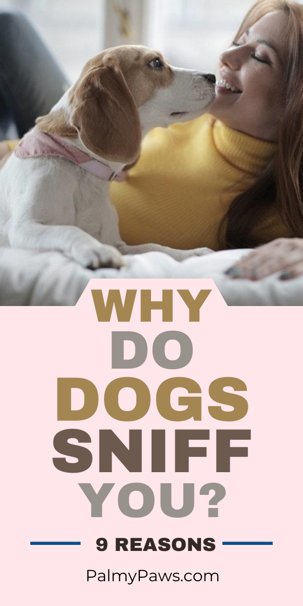 Why Do Dogs Sniff You Dog Behavior Cute Dog Pictures Dogs