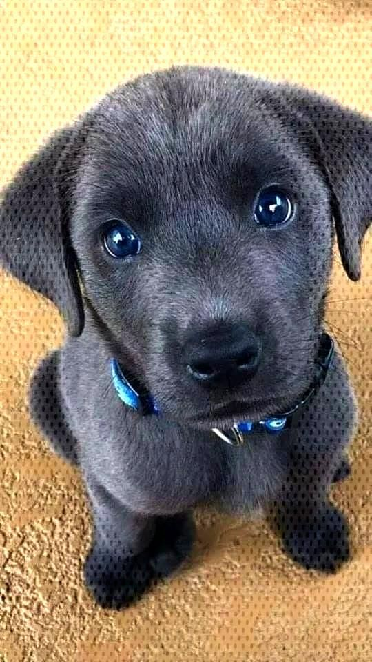Puppy pictures make the day better.