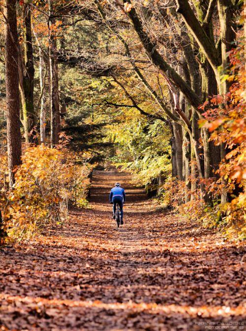 #bike #mountainbike #fall #forest