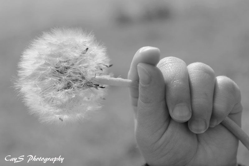 what do you see? weeds or wishes?