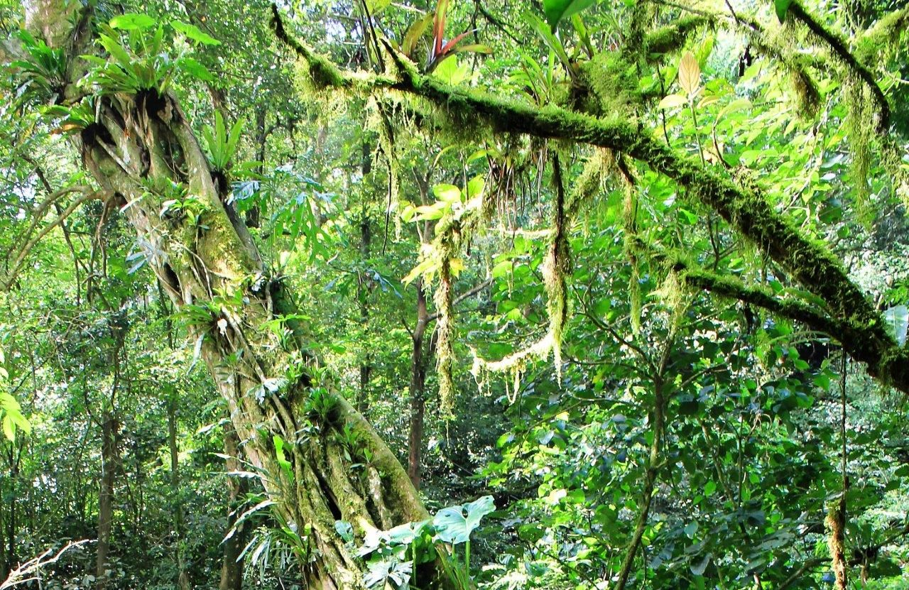 Panama rainforest See more at www.luxurytravelpursuits.com #luxurytravelpursuits