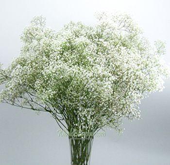 Buy Bulk White Filler Babys Breath Flower Babys Breath Flowers Babys Breath Babys Breath Bouquet
