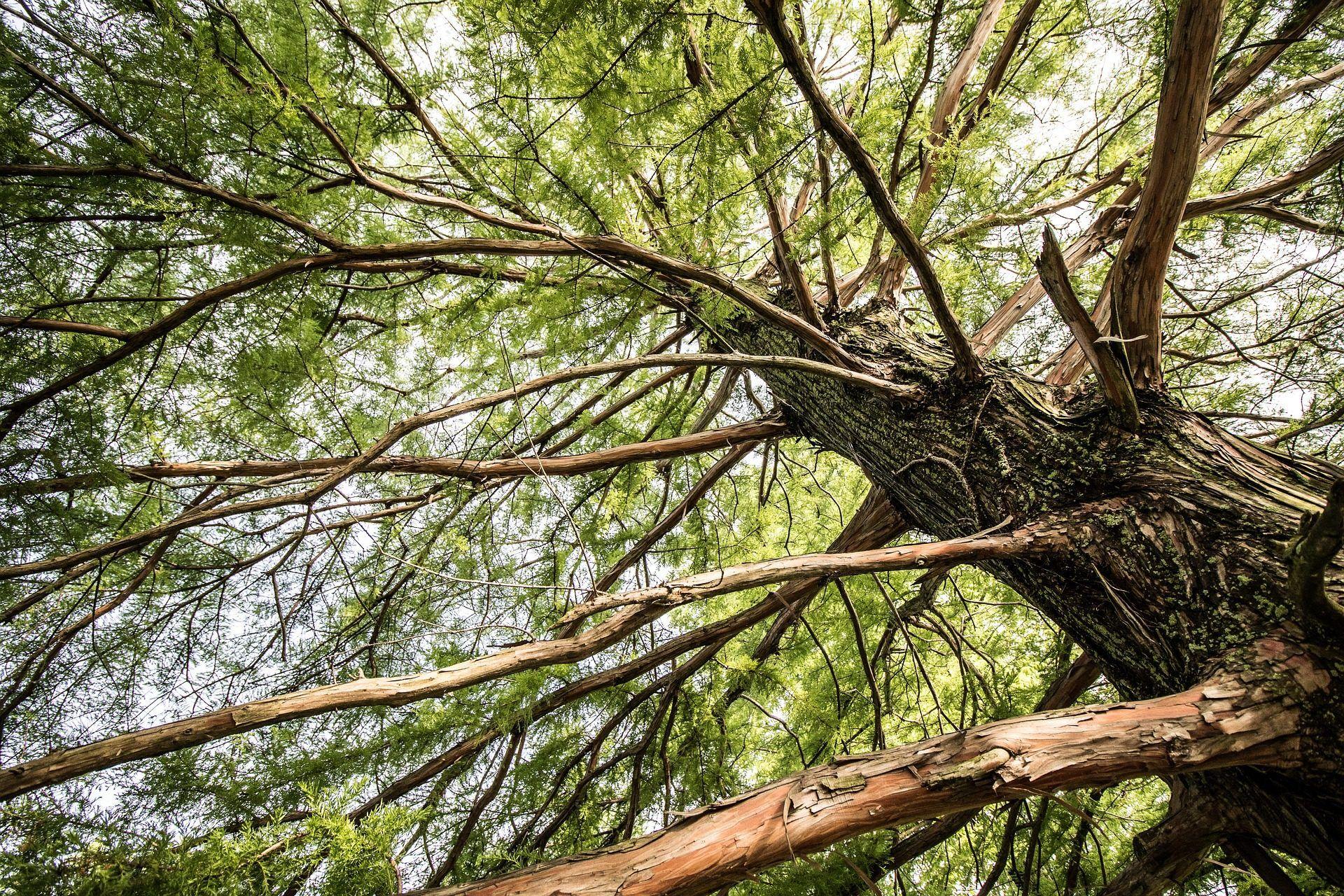 Bonito Anatomía De Un árbol Bosquejo - Anatomía de Las Imágenesdel ...