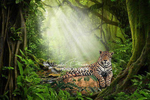 jungle backdrop premade backdrop wild animal photo photo