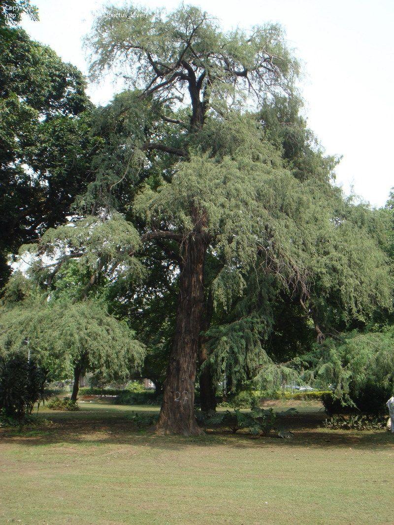 Pin En Trees