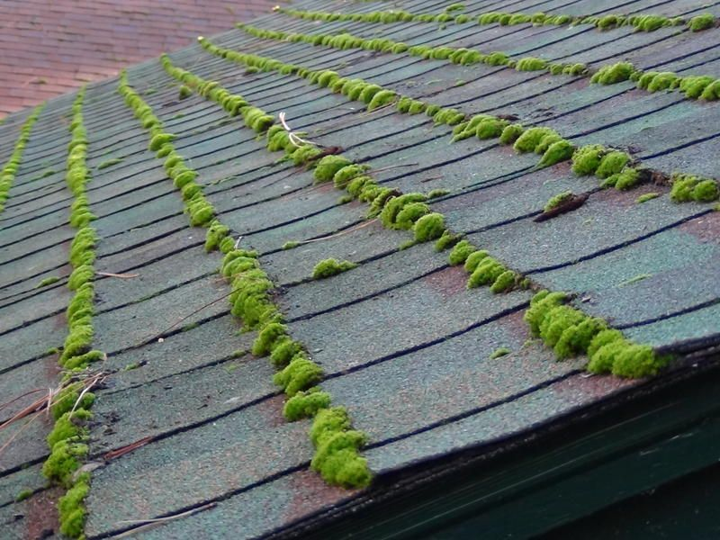 Roof Moss Isnu0027t Just Ugly. It Can Damage Your Roof. Call Northwest Roof  Maintenance To Learn More About Our Roof Moss Removal Services.