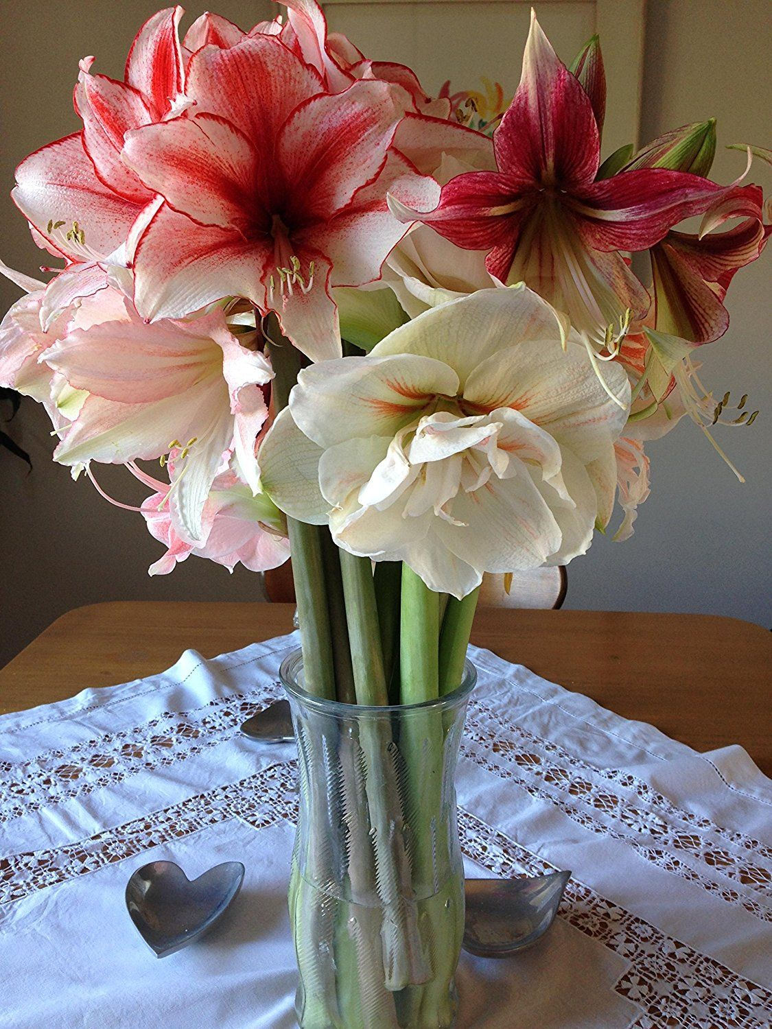The most amaryllis mix we ever did see
