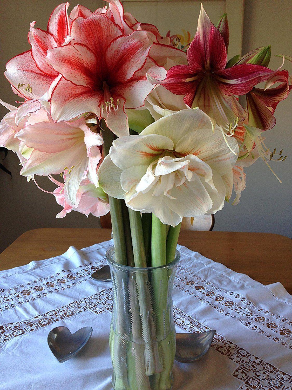 Allium Ampeloprasum Amaryllis Flowers Amaryllis Bulbs Flower Care