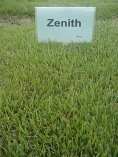 Zoysia Grass Maintenance How To Care For Zoysia Grass