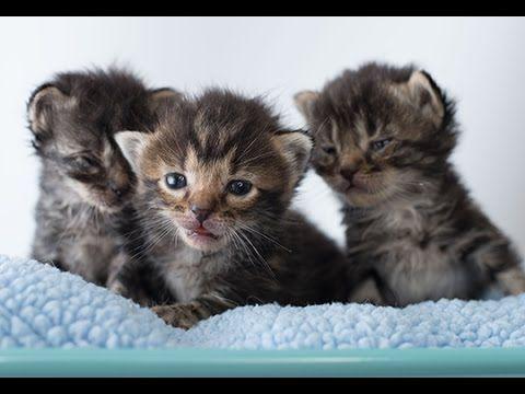 Rescuing Orphan Kittens From The Shelter Shelter Kittens Kitten