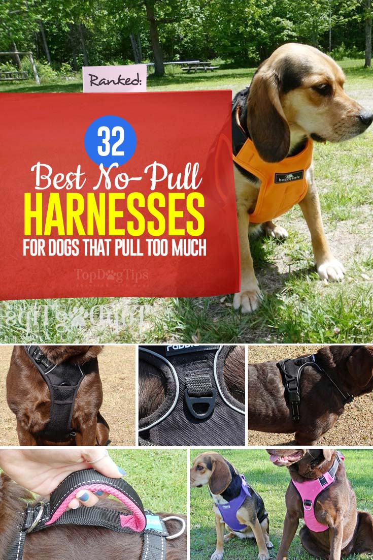 32 Best No Pull Harnesses For Dogs That Pull A Lot