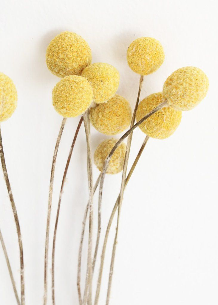 Pack Of 10 Dried Billy Buttons Craspedia In Natural Yellow Billy Buttons How To Preserve Flowers Dried Flowers
