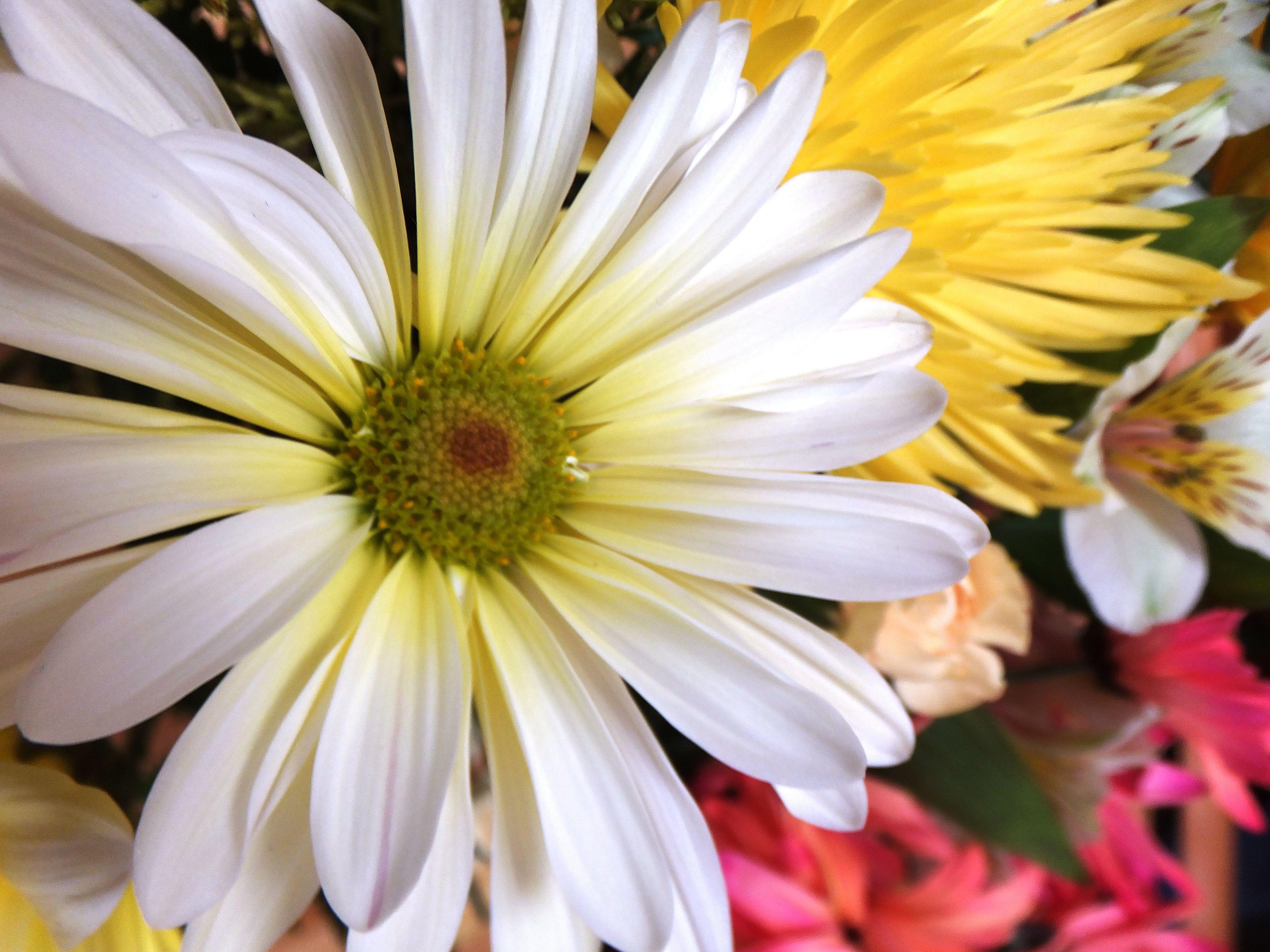 Enchanting flowers white daisy and yellow chrysanthemum enchanting flowers white daisy and yellow chrysanthemum izmirmasajfo