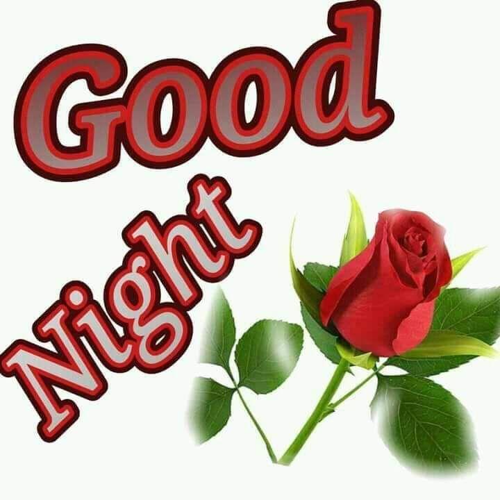 78 Romantic Beautiful Rose Quotes Good Night Pic Wallpaper Hd Love