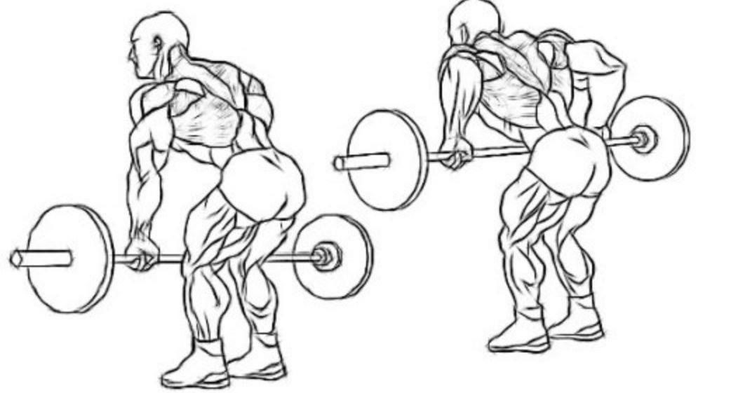 If Youre New To The Gym And Want To Build A Stronger Back This Is