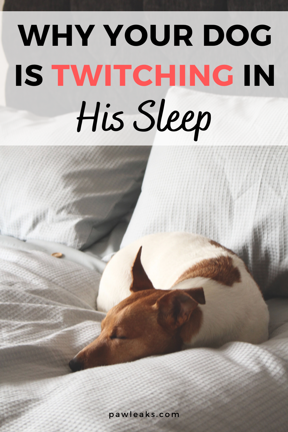 3 Reasons Your Dog Is Twitching In His Sleep Pawleaks In 2020 Your Dog Dogs Sleeping Dogs