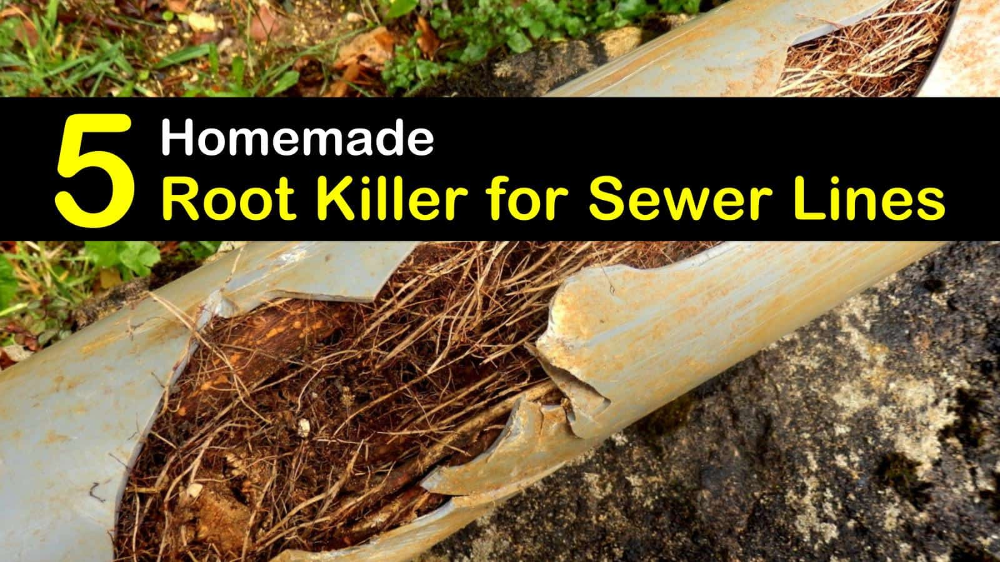 How To Get Rid Of Tree Roots In Plumbing