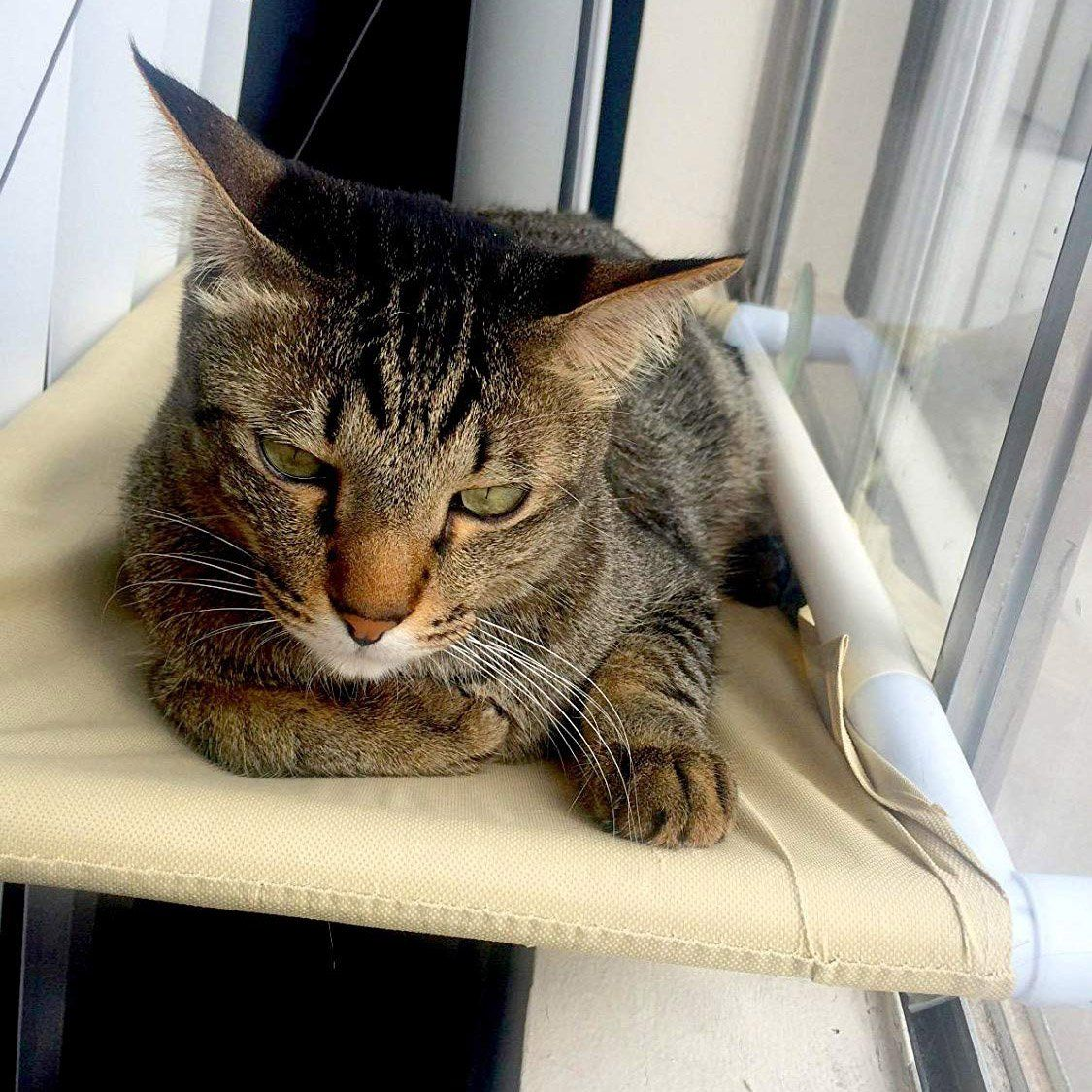 Outstanding Petpawjoy Cat Bed Cat Window Perch Window Seat Suction Cups Dailytribune Chair Design For Home Dailytribuneorg