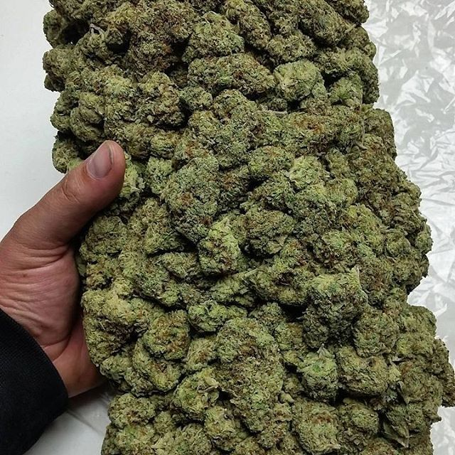 Earn your cannabis cooking certificate. Get your cannabis business ...