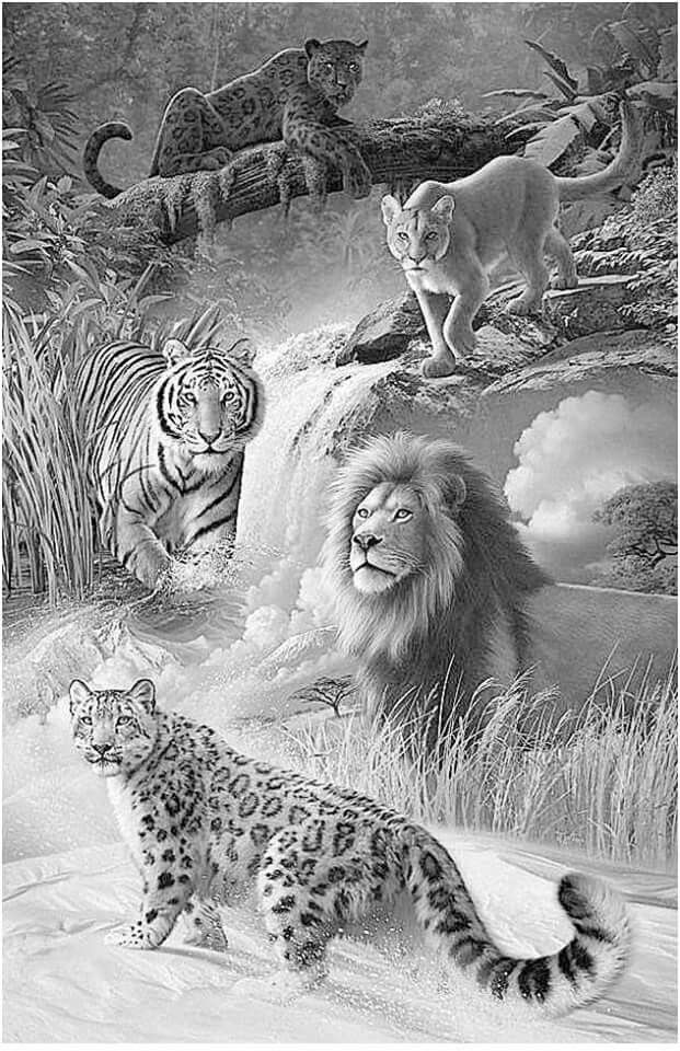 Pin By Cornelia Bezuidenhout On Wild Animals Pencil Drawings Of