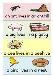 English teaching worksheets: Animal homes | Teaching - Animals ...