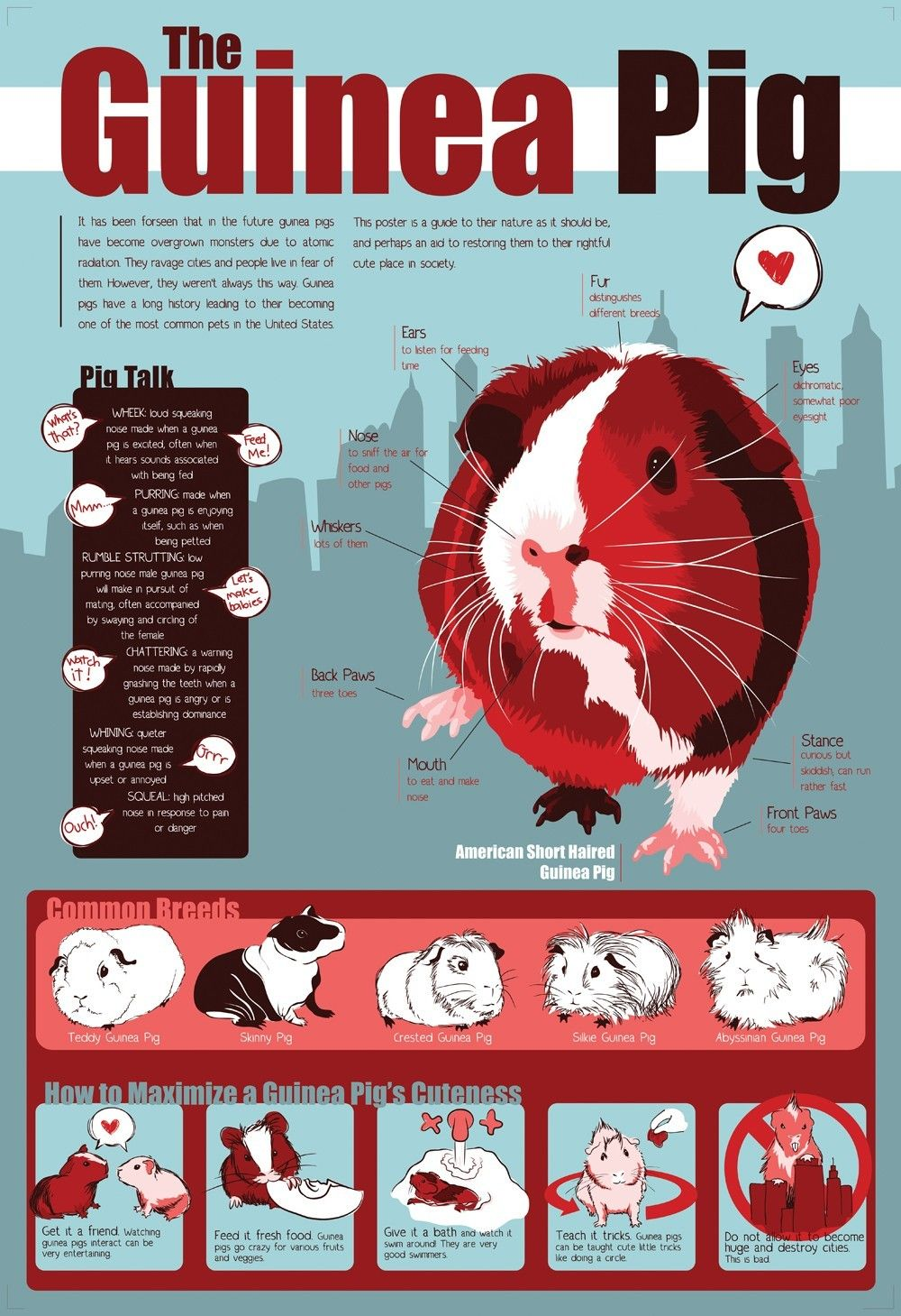 The most awesome images on the Internet | Pig stuff, Pet guinea pigs ...