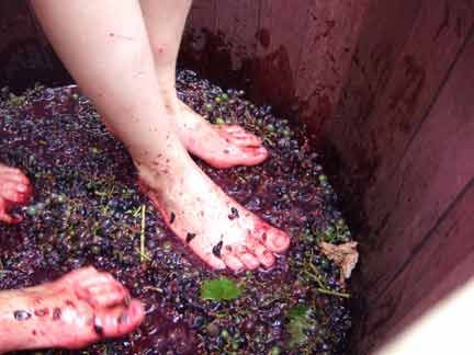 Making Wine The Old Fashioned Way Instead Of Walking Over Hobo