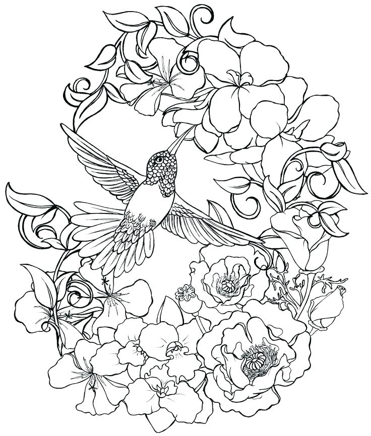 - Cardinal Bird Coloring Page Feeder Food Picture Of Pictures For Adults Pages  Birds Flying Free Unicorn… Bird Coloring Pages, Flower Coloring Pages, Coloring  Pages