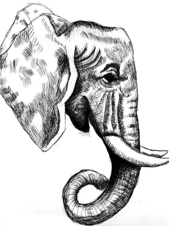 e100c7cf0 Elephant side view | art things. | Elephant head drawing, Elephant ...