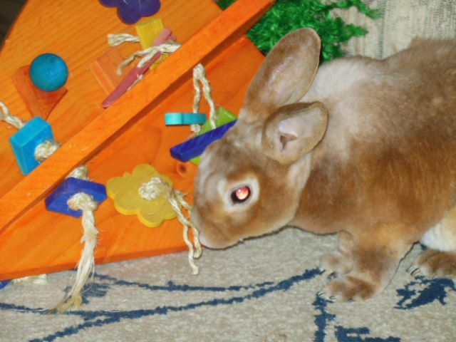 Crazy HUGE Carrot Rabbit Toys $49.97
