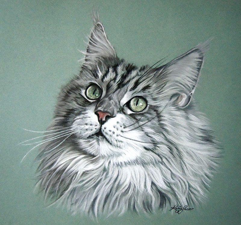 Katzenzeichnungen In Pastellkreide Cat Drawings In Soft Pastels