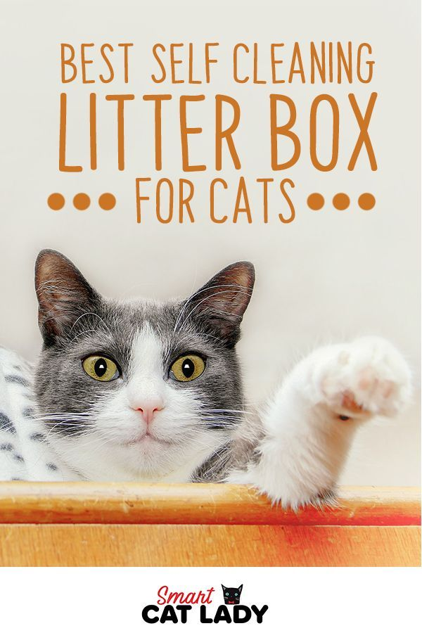 Best SelfCleaning Litter Box for Cats Self cleaning