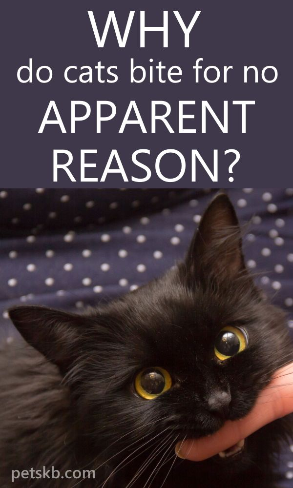 11 Ways to Stop Your Cat from Biting Cat biting, Cat