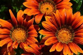 Blumen, Blüte, Orange, Pflanzen, Garten