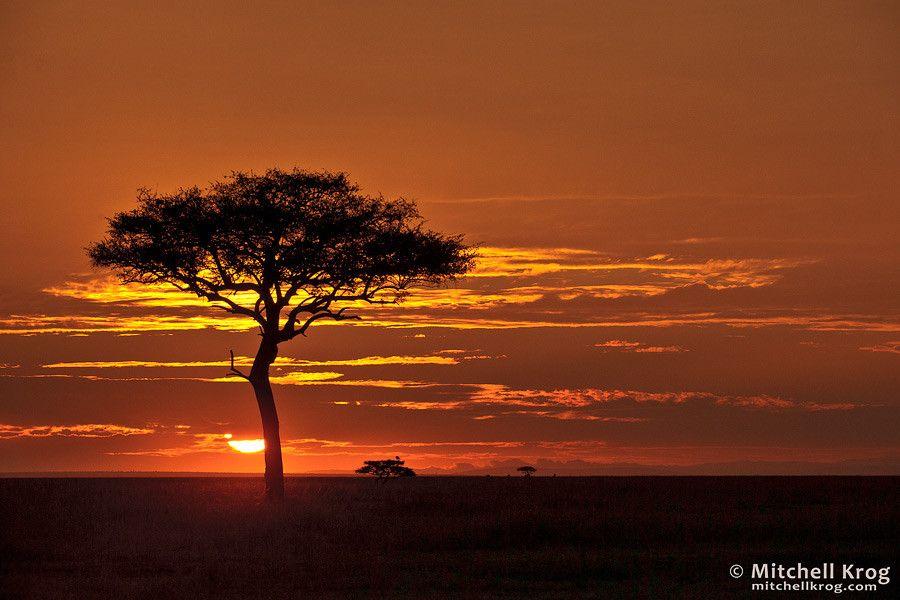 Iconic African Sunrise Maasai Mara Kenya Sunset Landscape Photography Landscape Photography Landscape Photos