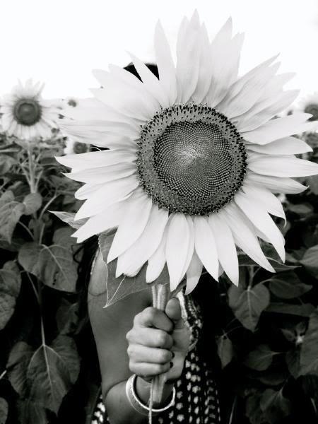 Girasol En Blanco Y Negro ɲεgrᴏ Y ßlαηcᴏ ßlαηcᴏ Y ɲεgrᴏ