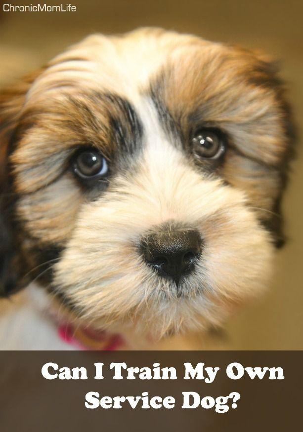 Can I Train My Own Service Dog Chronic Illness Bloggers