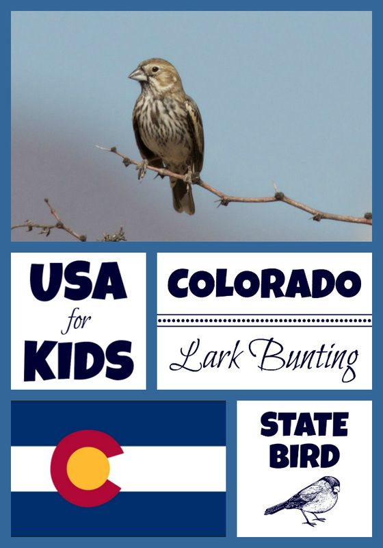 State Bird Coloring Pages By Bird Coloring Pages Colorado Facts