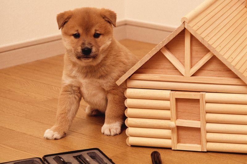犬のケージは必要 メリットや選び方 使い方や注意点 犬 ペットサークル 犬ケージ