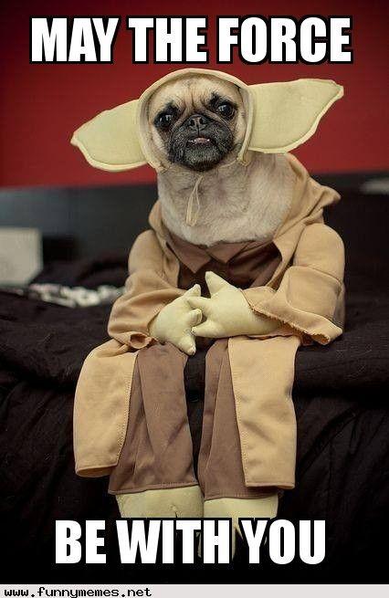 Star Wars Pug Funny Memes Yoda Dog Costume Pet Costumes Dog Costume