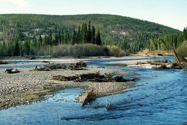 Google Image Result for http://www.bestwesternfairbanks.com/images/fairbanks-alaska-chena-river-3_o.jpg