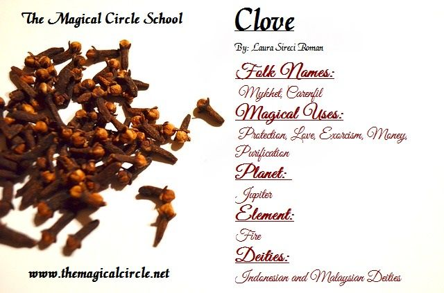 Clove Magical Properties - The Magical Circle School - www