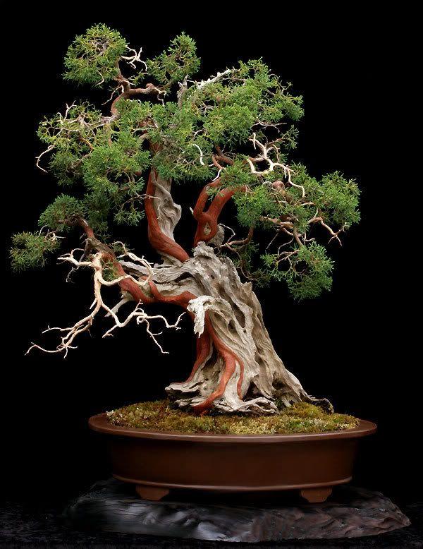 bonsaibaum maizwergengemeinschaft die magie des monats mai in inspirationsbildern. Black Bedroom Furniture Sets. Home Design Ideas
