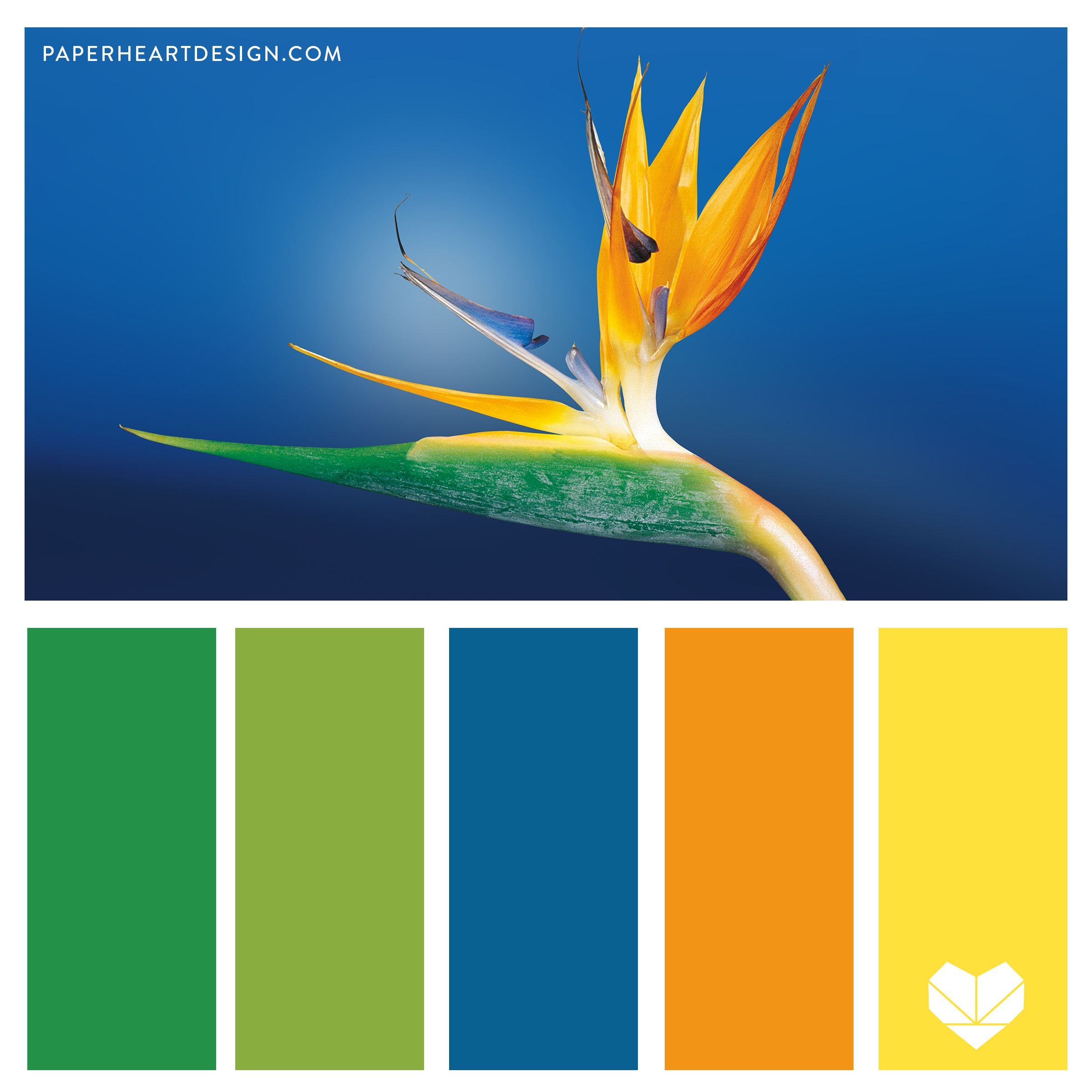 Pantone Color of the Year 2020: Classic Blue Color Palettes, Bird of Paradise Logo