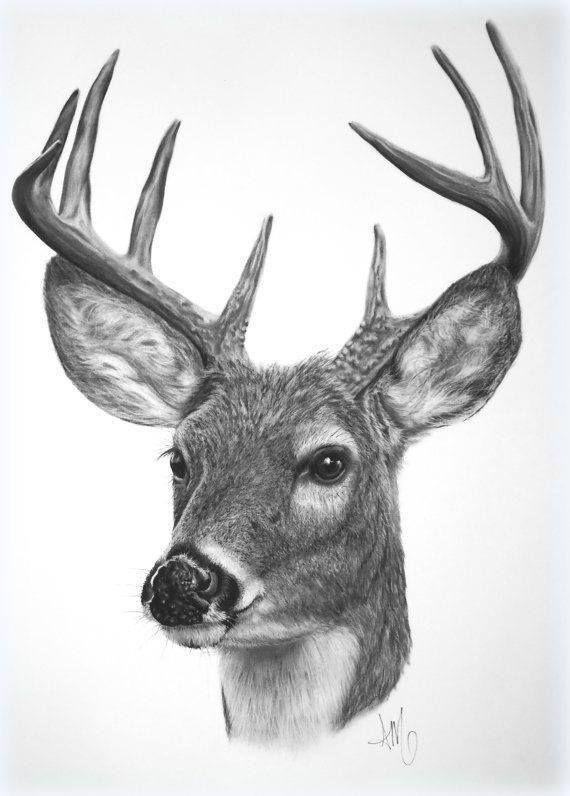 Deer drawing | Deer Dr...