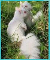 Photo of 27+ Cutest Albino Animals in the World | Brain Berries – #Albino #Animals #Berri…
