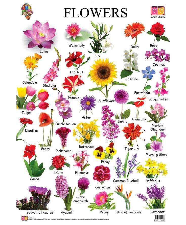 common flower types Flower chart, Flower names